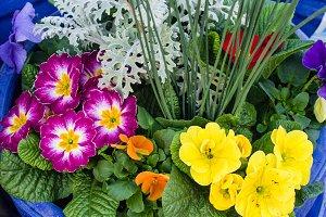 Arrangement of spring flowers