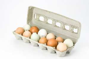 Carton of free range eggs