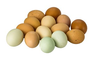 Free range brown eggs
