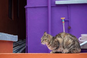 Cat, Purple Wall