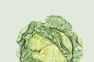 Illustration of Vegetables