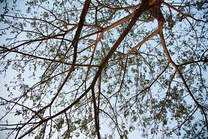 Branches of the tree.