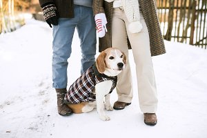Unrecognizable senior couple outdoors with dog in winter nature.