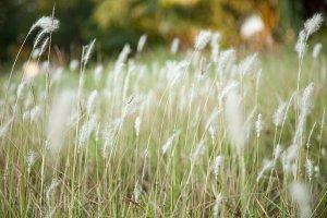 Flower of grass.