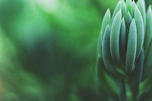 Dreamy Succulent Closeup