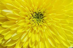 Bright and Yellow