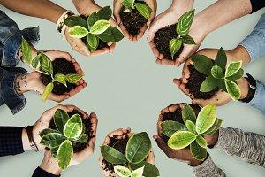 Holding plants
