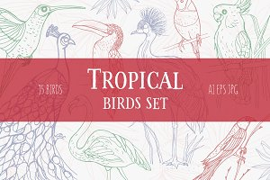 Set of exotic, tropical birds