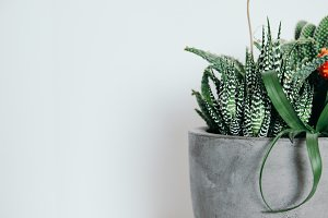 Concrete Succulent Pot Photo