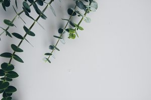Moody Eucalyptus Flat Lay
