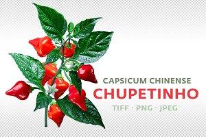 Chupetinho pepper