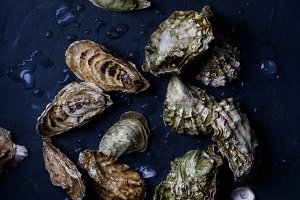 Assortment of fresh oysters