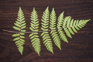 Fern leaf lying on wooden plank