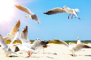 flock of white sea gulls