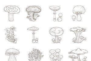 Different kind of mushrooms