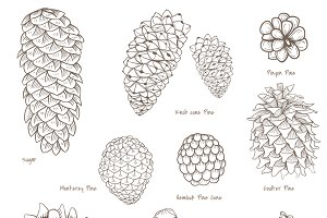 Pinecones collection