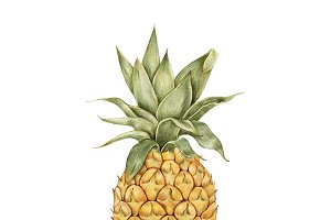 Illustration of pineapple fruit