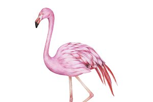 Illustration of pink flamingo