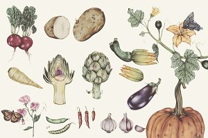 Illustration set of vegetables