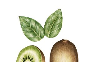 Illustration of fruit watercolor