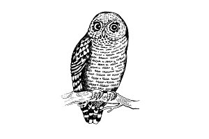 Owl bird engraving vector illustration