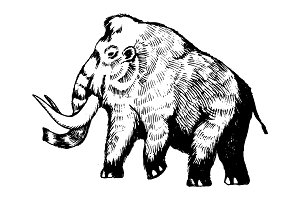 Mammoth engraving vector illustration