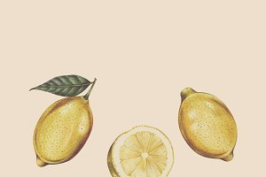Illustration of lemon watercolor