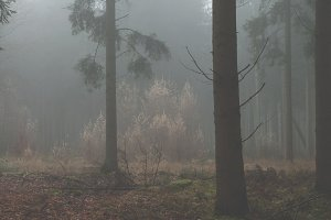 Trees in a dark foggy forest