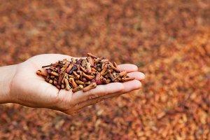 Crop of fresh clove spice