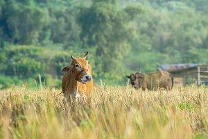 livestock industrial concept