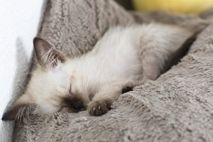 Baby cat sleeping peacefully