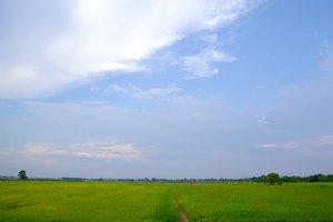 Fields of the sky.