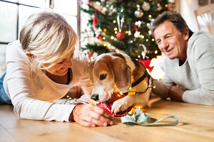 Senior couple with dog in front of Christmas tree.