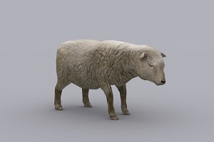 SHEEP fbx only