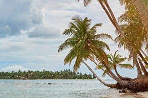 Caribbean sea beach with palms