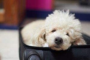 Dog sleeping inside black suitcase