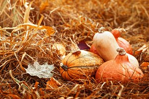 Various autumn pumpkins leaves