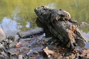 log floating in lake