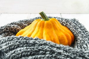 Pumpkin patty pan in a warm cozy scarf on a white wooden table. Autumn harvest.