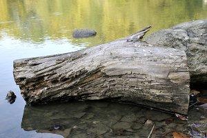 log floating in lake