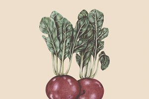 Illustration of vegetable
