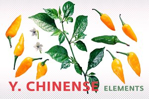 Y. chinense elements