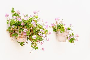 plantpots in the wall