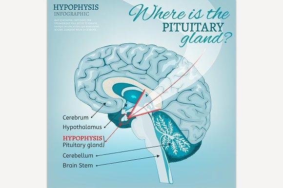 Pituitary Gland Image
