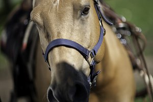 Front View of a Horse