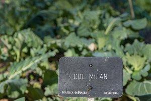 detail signboard, Garden, planted ca
