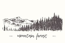 Fir forest in the mountains