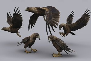 GOLDEN EAGLE fbx only