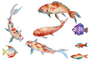 Watercolor Fish Koi Red Carp