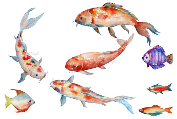 Watercolor fish koi red carp illustrations creative market for Red and white koi fish